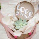 Succulent Guest Wedding Gift